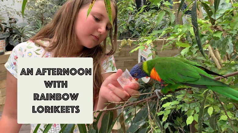 An afternoon with Rainbow Lorikeets   Up Close and Feeding Lorikeets   Stephen and Yhana   Vlog 24