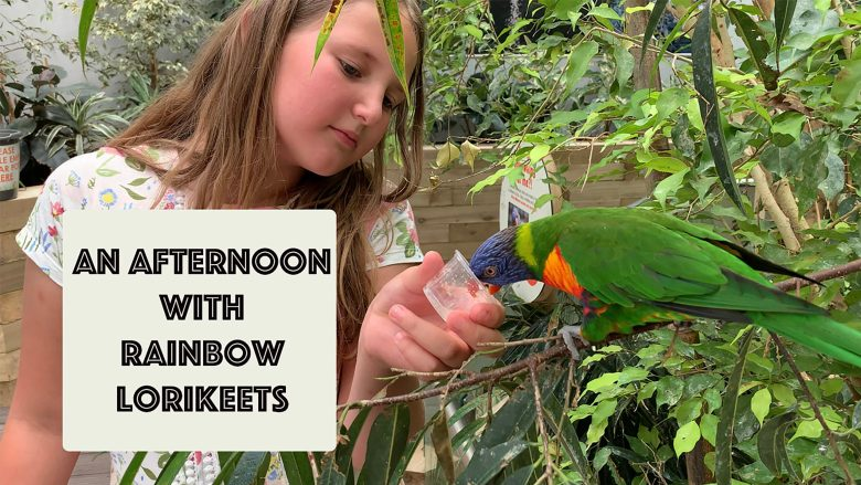 An afternoon with Rainbow Lorikeets | Up Close and Feeding Lorikeets | Stephen and Yhana | Vlog 24