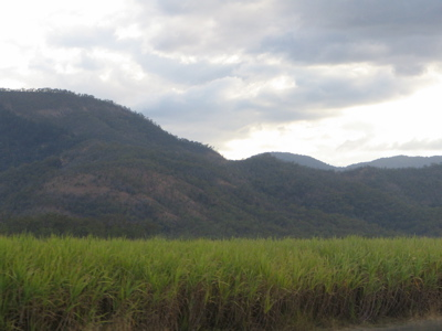 Sugarcane field Queensland Australia Copyright Renate Leahy 2004