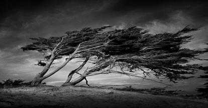 windy-trees