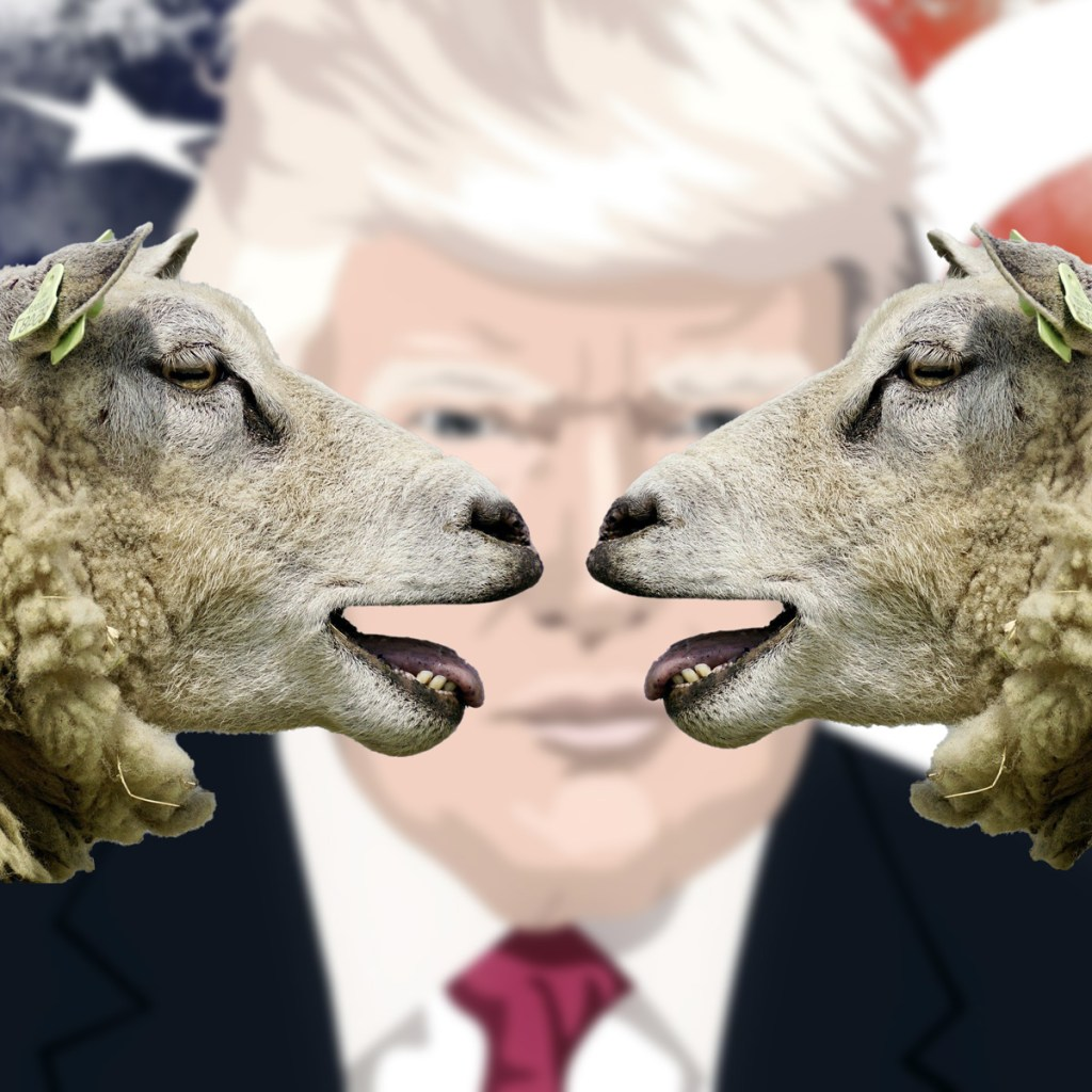 sheep talking about Trump