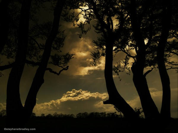 Landscape Usa. Stephen Bradley Video