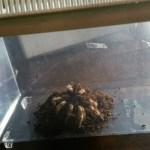 A special-order spider (!) arrives