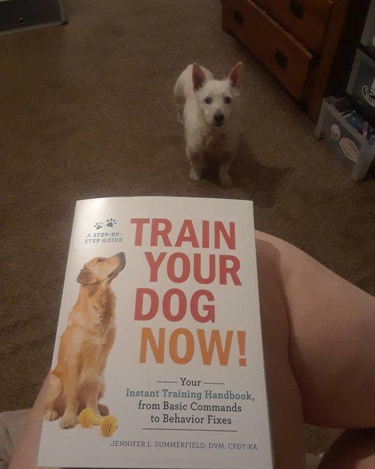 Train Your Dog Now! by Jennifer L. Summerfield DVM CPDT-KA