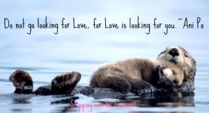 love is looking for you
