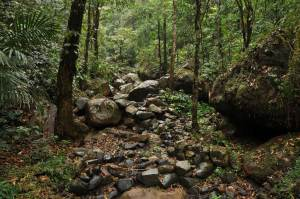Nongritat and the living root bridges