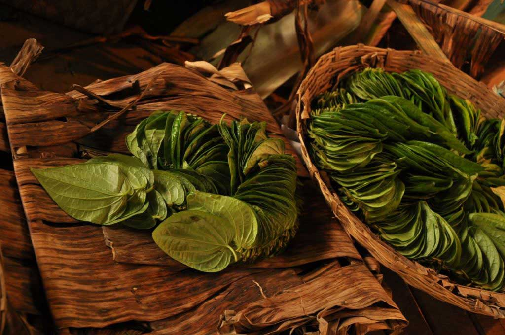Betel Leaf sold in markets (folha de Betel à venda nos mercados)