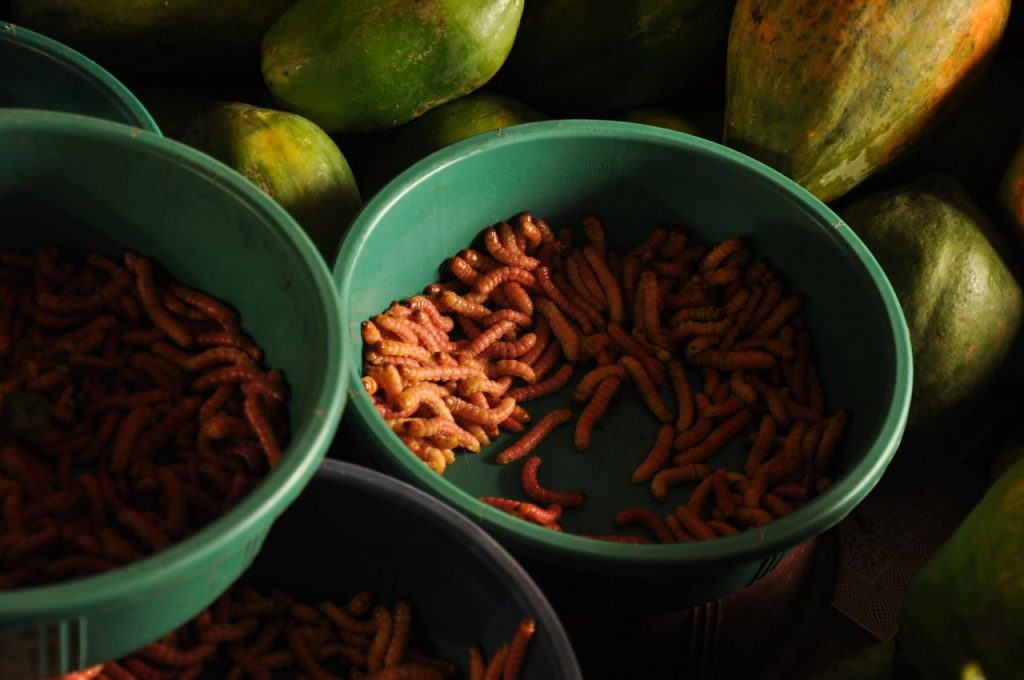 worms sold at Mao Market, in Kohima. Nagaland