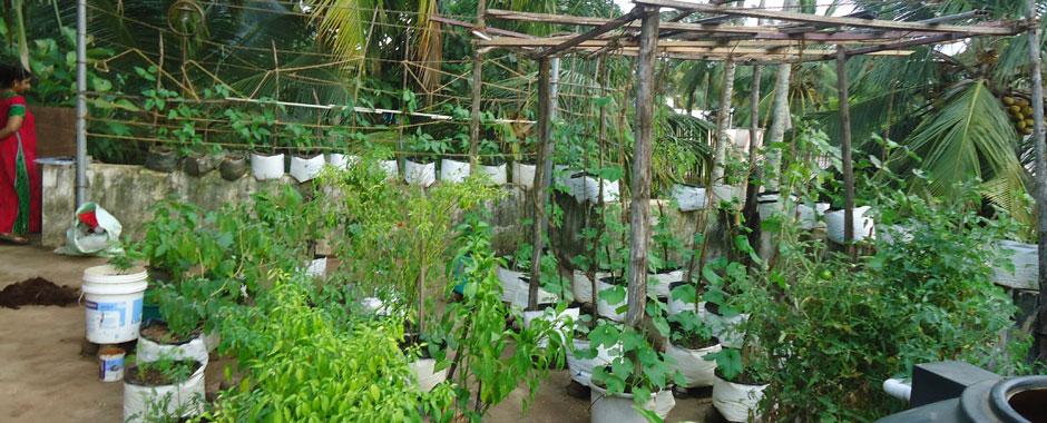 garden cultivation