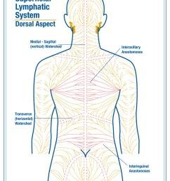 back massage diagram [ 792 x 1224 Pixel ]
