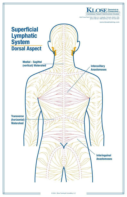 medium resolution of back massage diagram