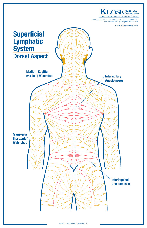 hight resolution of back massage diagram
