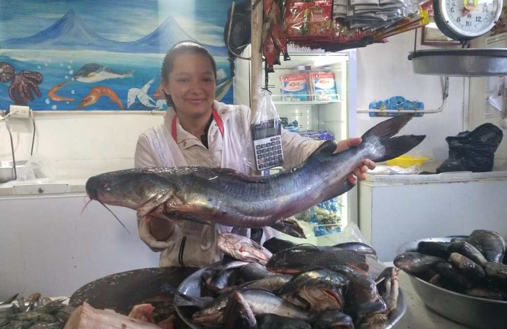 DIACO realiza monitoreos ante aumento en precios de mariscos