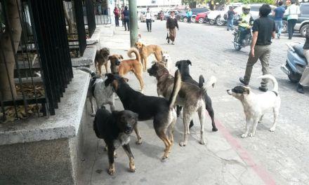 Preocupan ataques de perros en Sololá