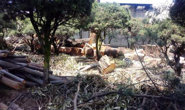 Gestión para tala en el Centro Intercultural, habría iniciado hace más de un año