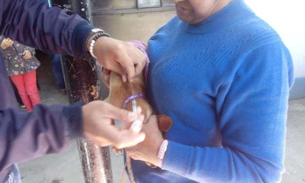 ¿Cuántas mascotas han vacunado en Quetzaltenango?