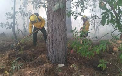 5 mil hectáreas han sido afectadas por incendios forestales en el occidente de Guatemala