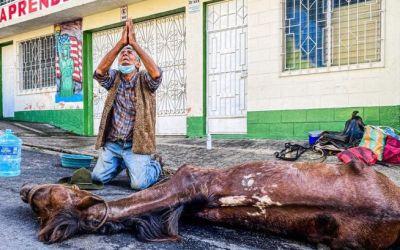 De rodillas, vendedor llora la muerte de su caballo; era su compañero y su familia