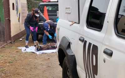 Asesinan a dos hombres en Colomba