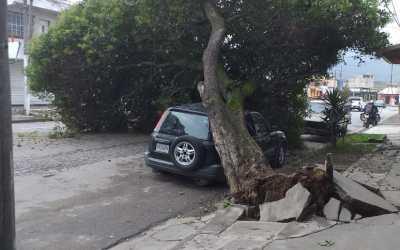 Árbol cae sobre un vehículo en la zona 3 de Xela, el tránsito y el servicio eléctrico se ven afectados