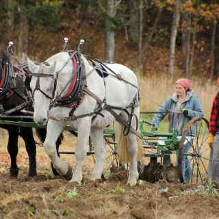 Draft Horses plowing a field