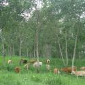 Farming the Woods: Profitable Agroforestry for Homesteads and Farms