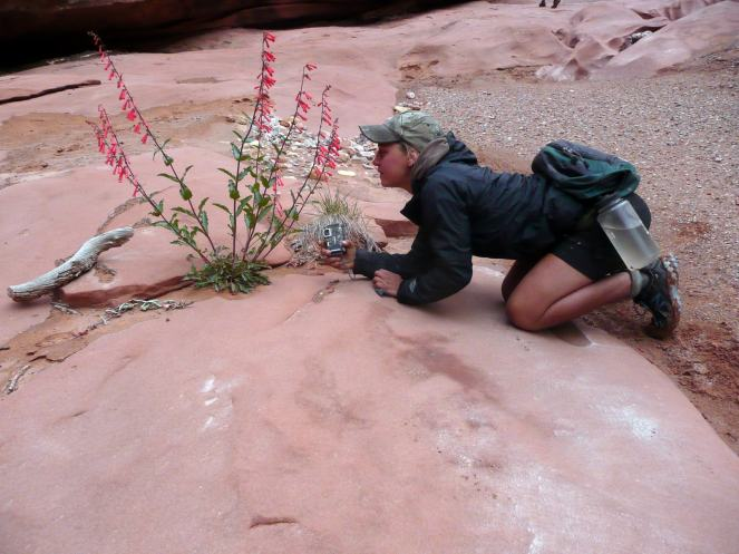 Susanna investigates a wildflower on the Deserts of Arizona GFS trip