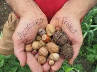 variety of whole nuts in their shell resting in the palms of two hands