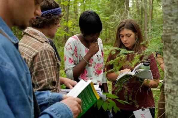 Ecology students use Dichotomous keys to ID plants in the Cedar Swamp