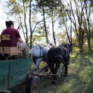 a student and a teacher drive a horse-powered cart in the green rolling hills of the Kentucky landscape. sun shines through the trees and the light is warm and yellow.