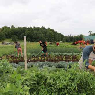 Students work on the Sterling College Farm