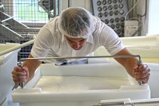 a person leaning over a cheese vat cutting the curd