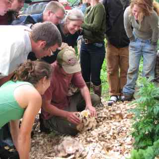 a group of people leaning over a man who is harvesting a mushroom from a full bed of mature mushrooms