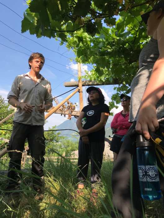 a man holding a grapevine in a vineyard talking to a group of people