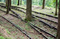 Tracks through the facility are gradually being displaced by nature's growth.
