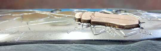 William_Henry_B10_Longhorn_Beetle_13