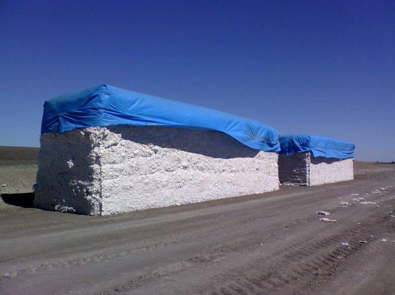 Texas International Cotton School - 2011