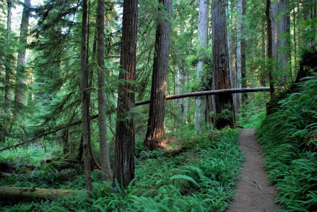 As Cool As The Air In A Redwood Grove?