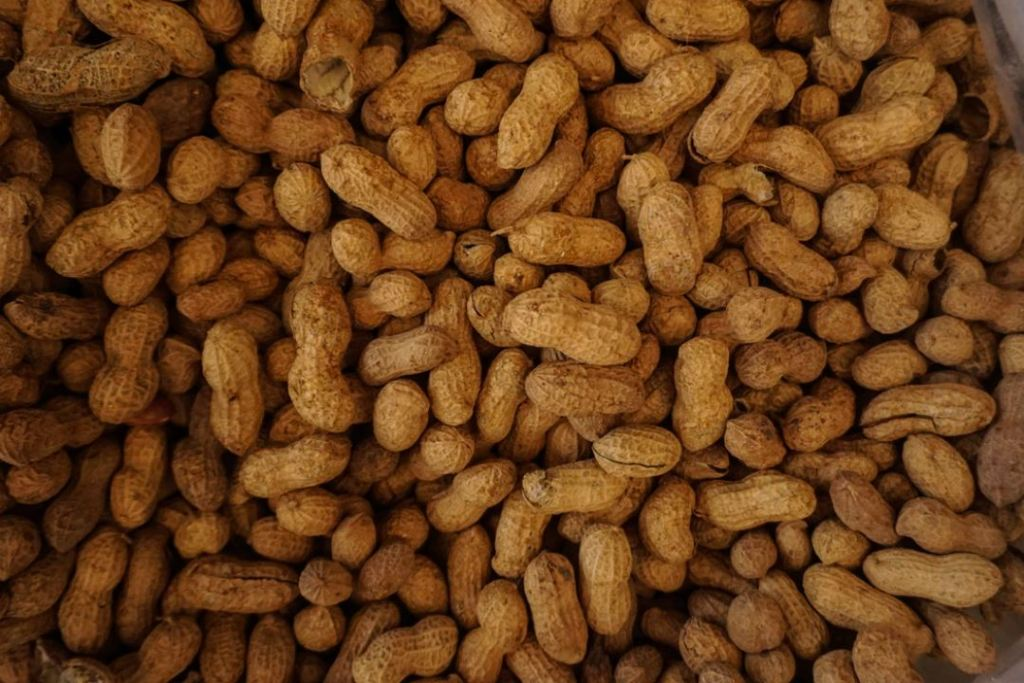 The 101 Of Food Allergy OIT
