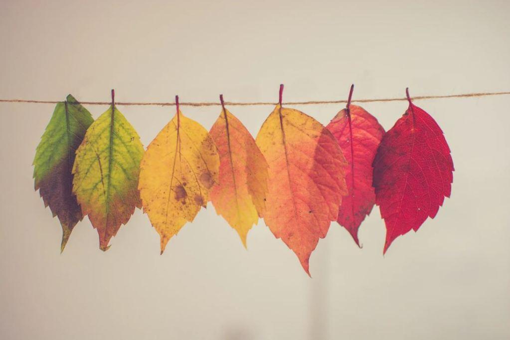 Kurdish Colors On Display