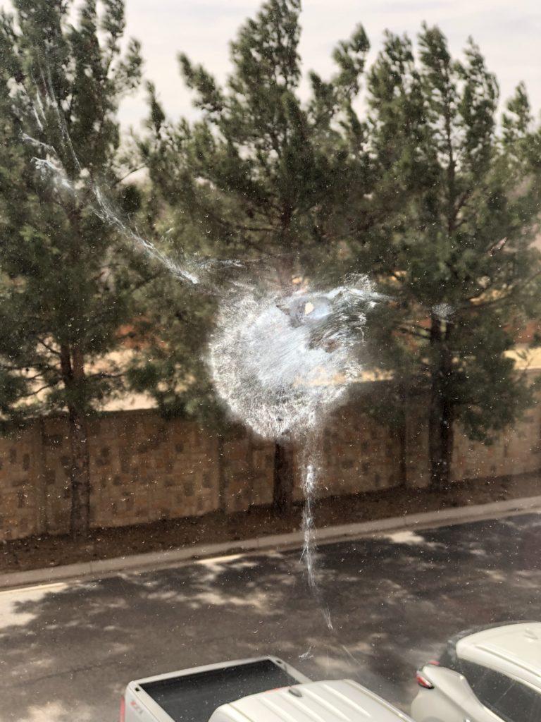Bird Hitting Window Meaning