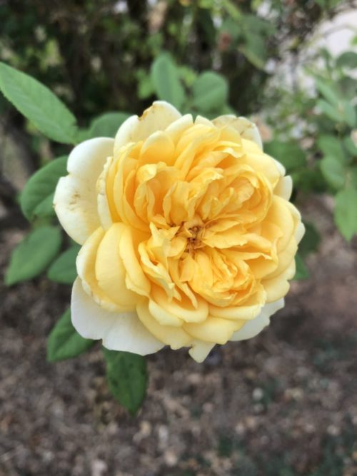 This Is The Actual Yellow Flower