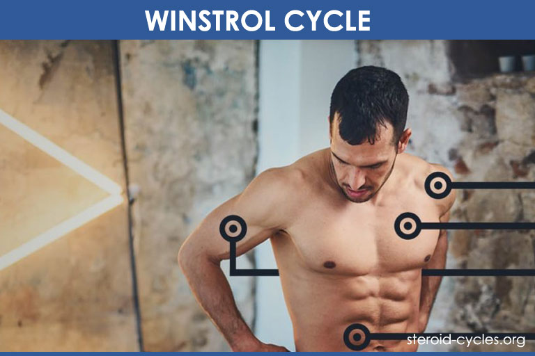 Winstrol Cycle: Mind-Blowing Results Inside! [2019]