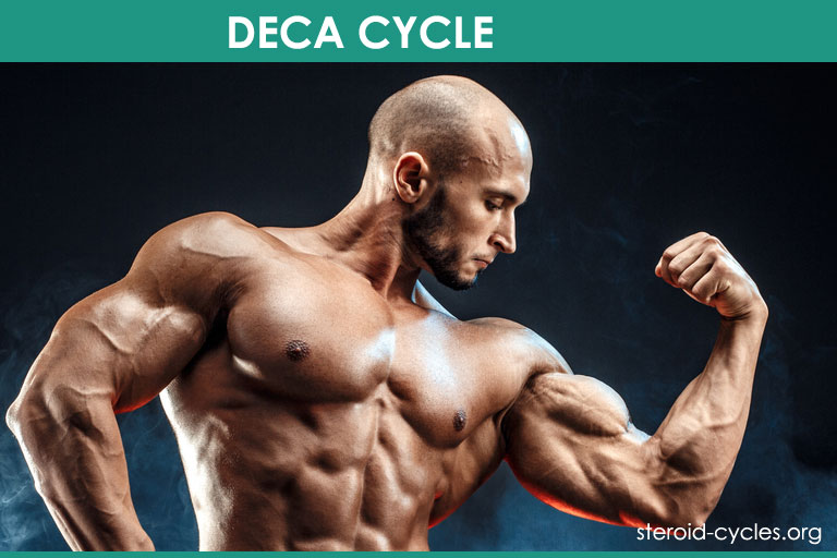 Deca Cycle: Deca-Durabolin Benefits, Effects, Results Revealed [2019]