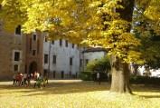 tigli-castello-rovasenda