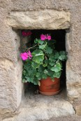 Flowers in a nook