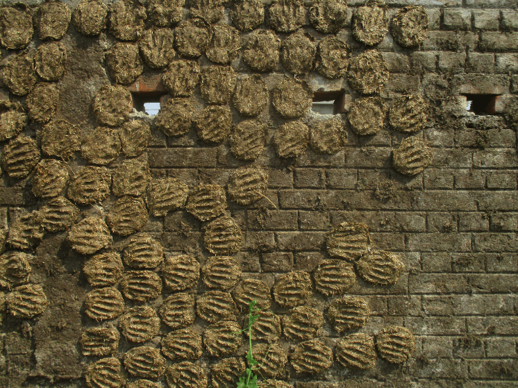 Cow dung pats used for cooking drying on a wall.  This is a really common sight.  I am sure the cooking fires are a major contributor to the poor quality of Indian air.