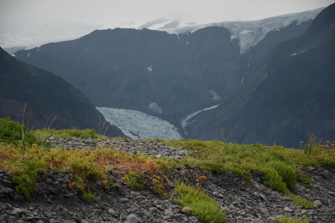 Aialik Glacier Far