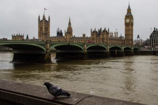 Flying rats adorn the skies of London
