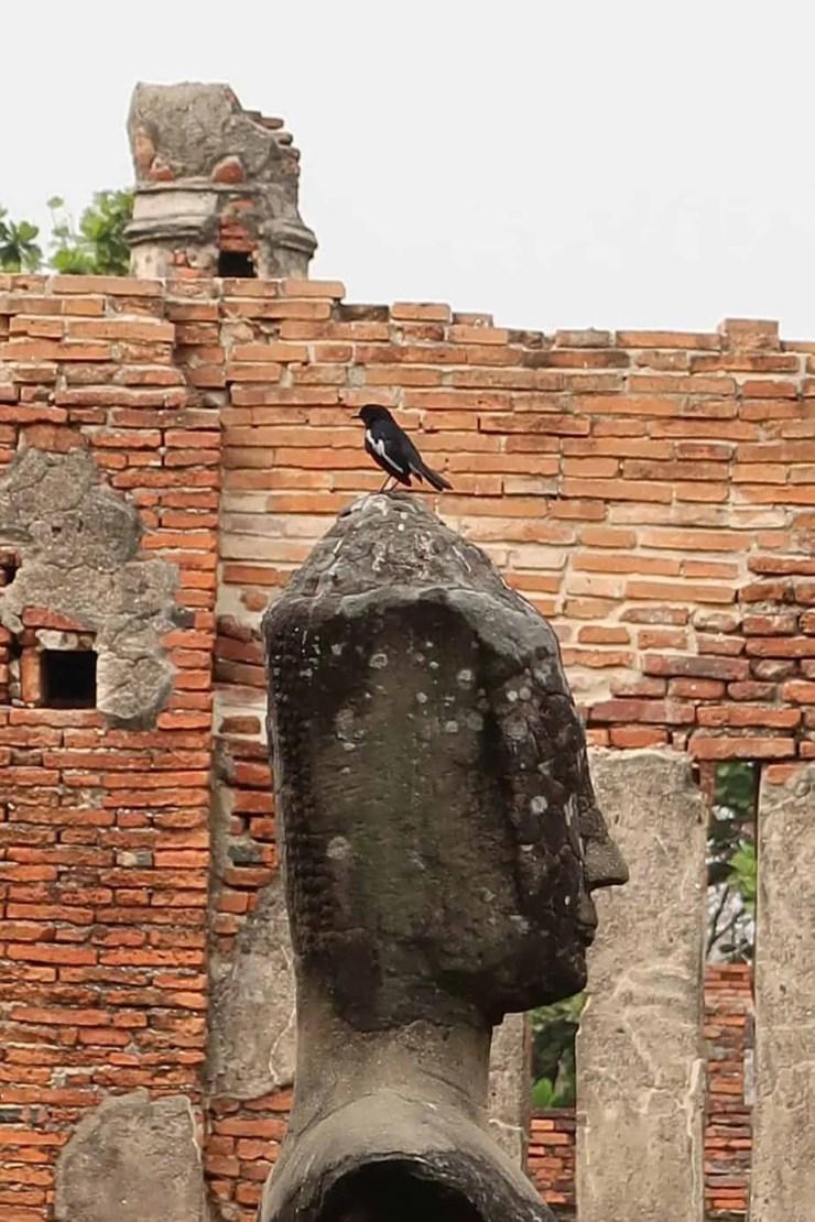 Bird standing on a Buddha relic at Wat Maha That